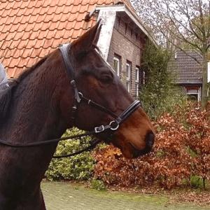 Bitloos Een paar gedachten - Sport & Horsemanship United -2
