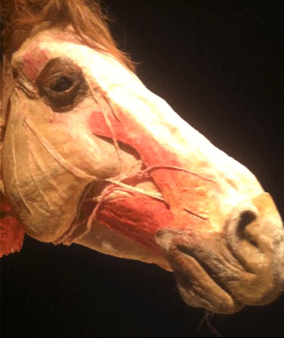 Bitloos Een paar gedachten - Sport & Horsemanship United