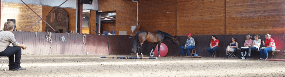 Nieuwe kennis en interessante links - anatomie, biomechanica en meer - 2 - Sport & Horsemanship United