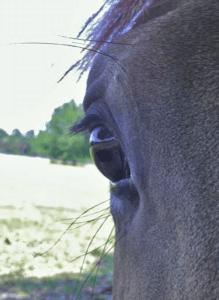 Mizu no kokoro - Sport & Horsemanship United 5