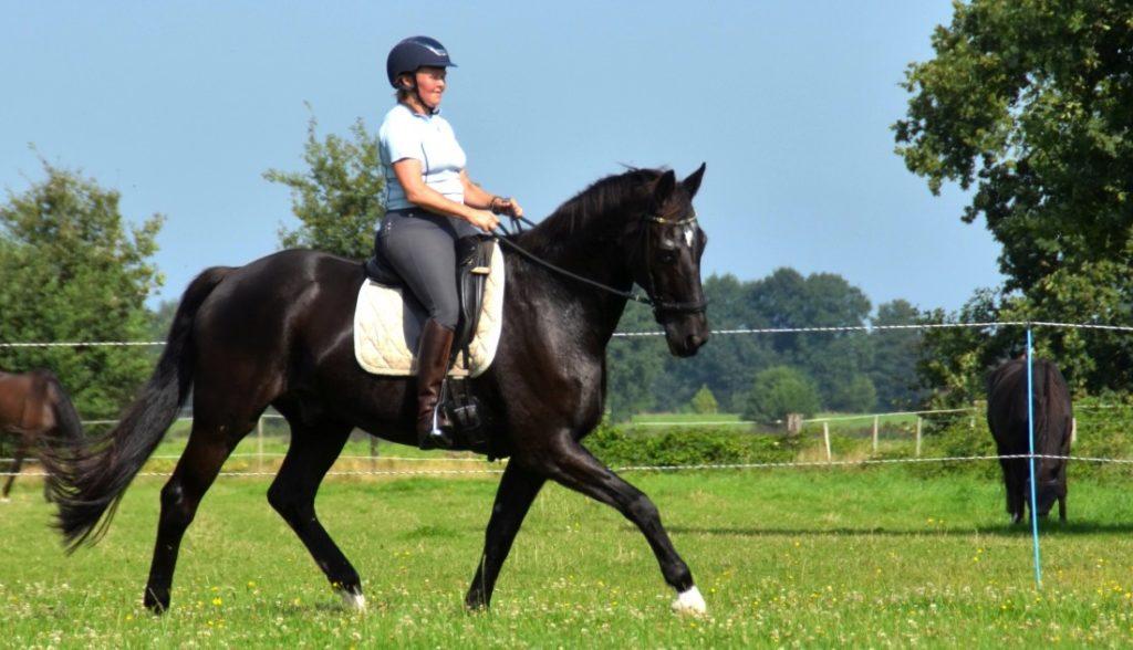 5 Bewezen succesvolle stappen om je paard te helpen met zijn balans 1