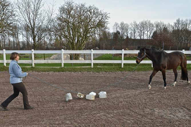 Voorbereiding op het Onverwachte 2 - Sport & Horsemanship United