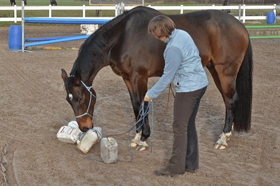 Voorbereiding op het Onverwachte 5 - Sport & Horsemanship United