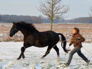 Sport Horsemanship onlosmakelijk met elkaar verbonden 1