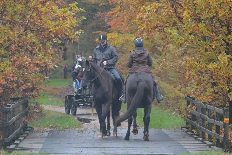 Omdenken - Sport Horsemanship United